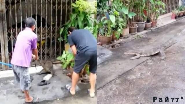 В Тайланде спасли застрявшего в металлической ограде варана. (Видео)