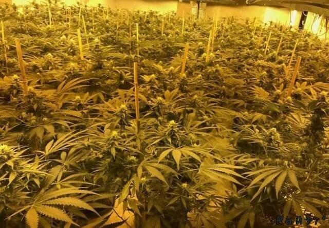 Британские полицейские обнаружили плантацию марихуаны в подземном, ядерном бункере.