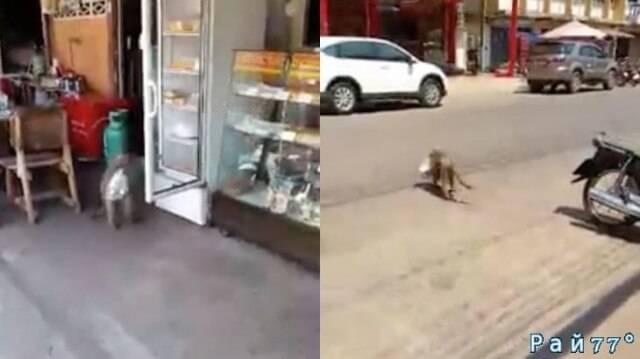 Наглая обезьяна ограбила дорожное кафе в Тайланде. (Видео)