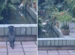 Очень вредный кот искупал нарушителя своих границ ▶