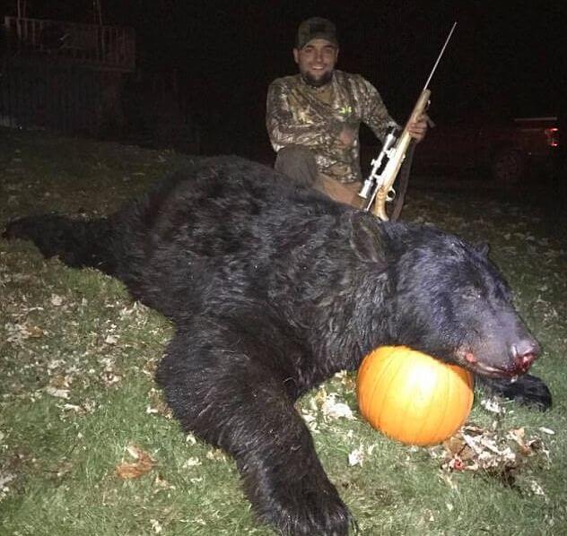 Охотник подстрелил гигантского медведя в Пенсильвании.