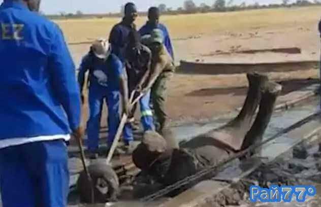 Слонёнок свалился в поилку для животных в африканском заповеднике