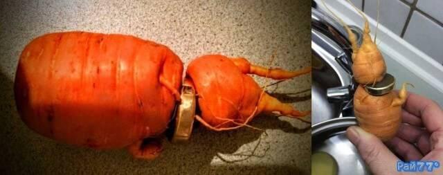 Немец обнаружил потерянное обручальное кольцо на моркови