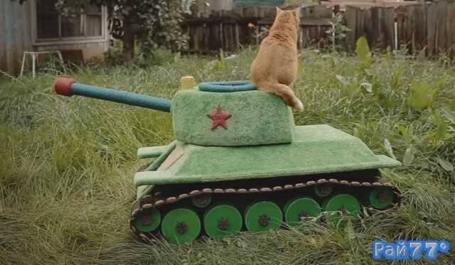 Кот на танке испугал английские интернет издания