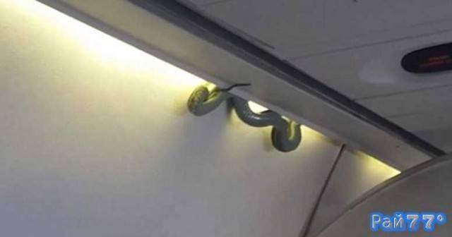 Змея неожиданно появилась в самолёте во время авиаперелёта в Мексике