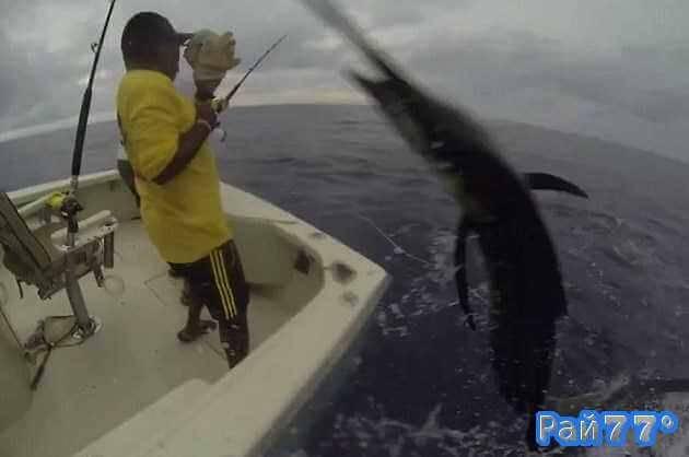 Рыба - меч запрыгнула в лодку панамских рыбаков