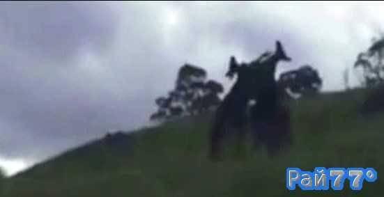 Два кенгуру подрались в австралийском заповеднике