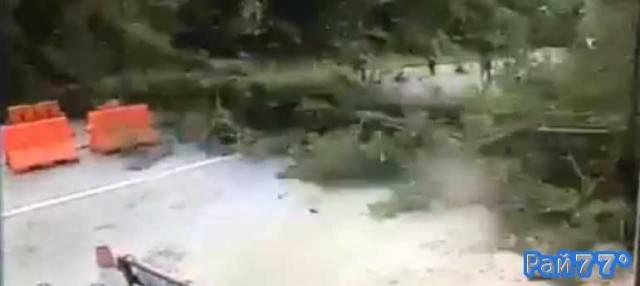 Дерево чуть не придавило дорожных полицейских в Тайланде