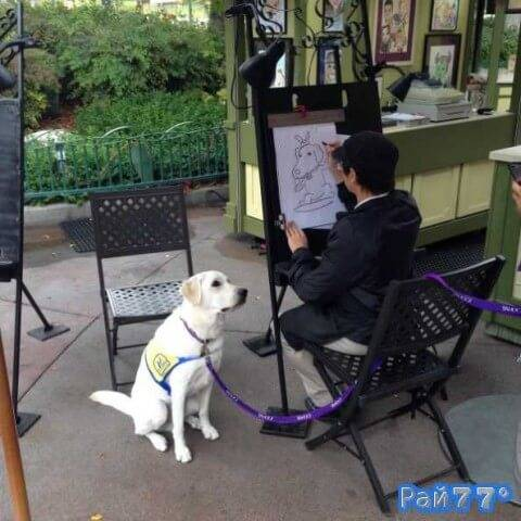 Пёс по кличке Яху терпеливо позирует карикатуристу в Диснейленде