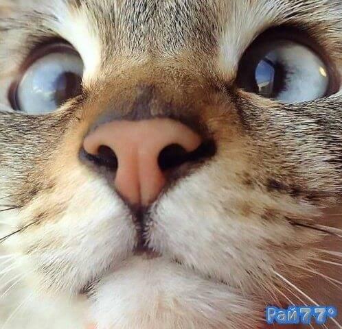 Косоглазый кот стал знаменитым в Японии