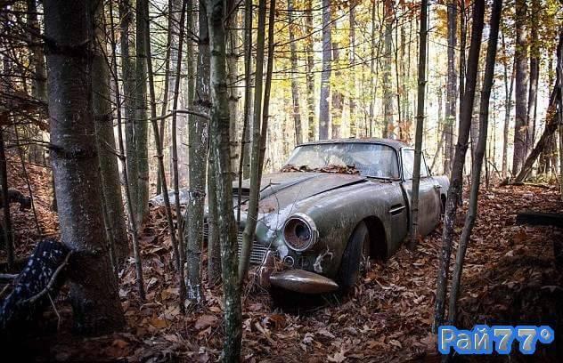 В американском лесу обнаружили бесхозный автомобиль Aston Martin Db4 стоимостью 500000$.