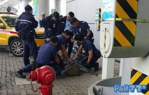 Дикий кабан парализовал движение воздушных судов в аэропорте Гонконга. (Видео)