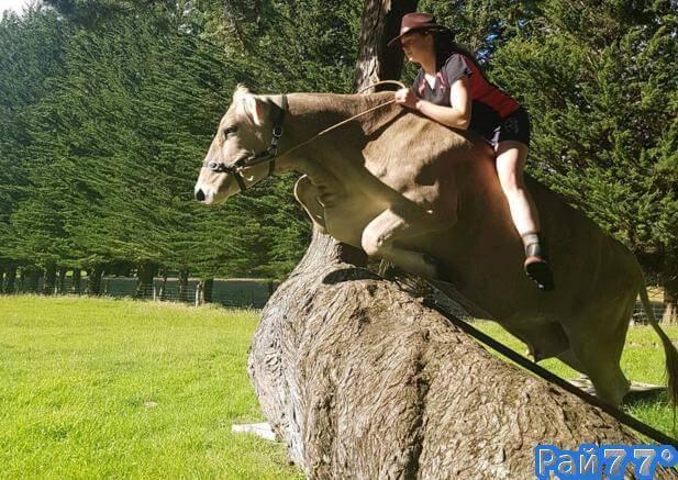 История настоящей дружбы из Новой Зеландии. Ханна и её верная «скаковая лошадь» - корова по имени Лейла. (Видео)