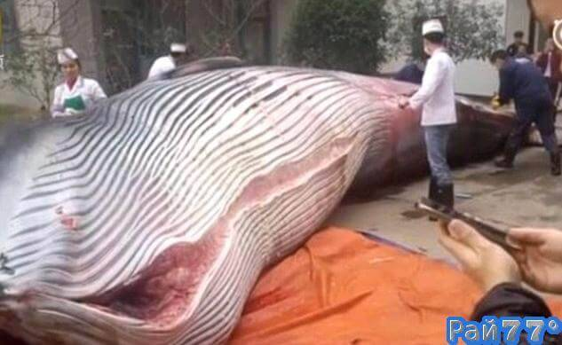 Китайская компания запаслась «провизией» для своих работников и купила 8-тонного кита. (Видео не для слабонервных)