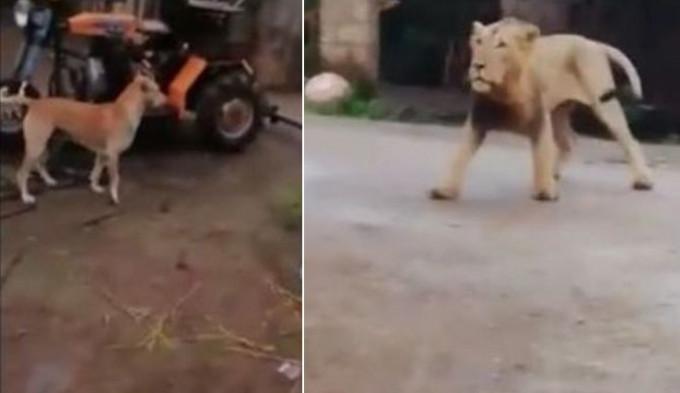 Видео про смелого кота, порно онлайн авина