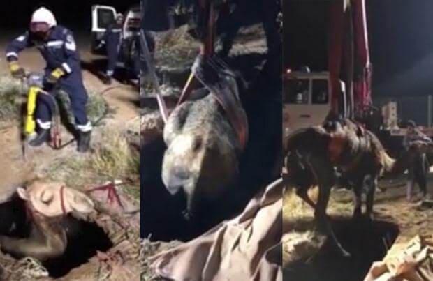 Провалившегося в яму с водой верблюда спасли в Дубаи. (Видео)