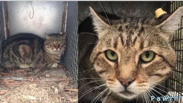 Одичавший кот за три месяца истребил сотни птиц, ящериц и даже валлаби.