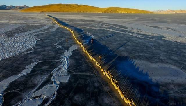 3000 овец под охраной пастухов совершили миграцию по льду самого высокогорного озера в Тибете.