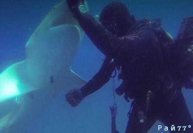 Акула с металлическим крюком в брюхе попросила помощи у дайвера во Флориде. (Видео)