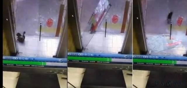 Собака разбила стеклянную дверь во время погони за кошкой в Малайзии. (Видео)