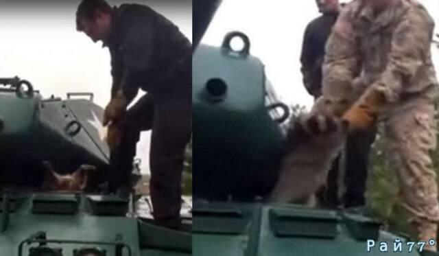 Пухлый енот, застрявший в люке бронетранспортёра был спасён военными в США. (Видео)