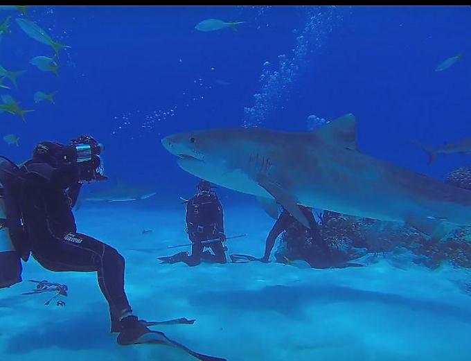 Стриптизерша акула
