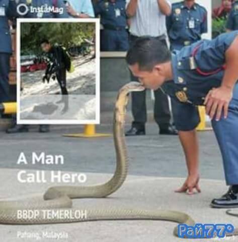 Малазиец целует змей