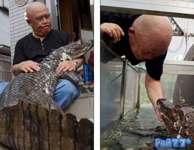 Японец приручил каймана и содержит его в качестве домашнего животного